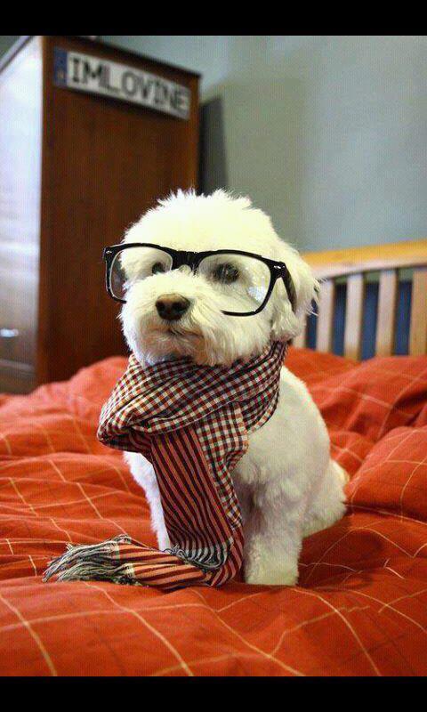 a.aaa-Intelligent-sweet-dog