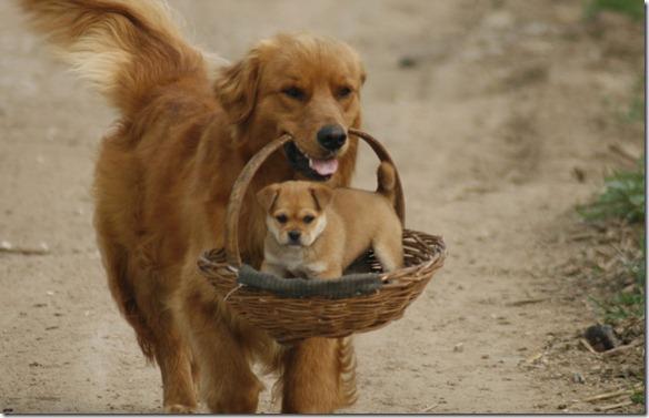a.aaa-Sweet-dogs