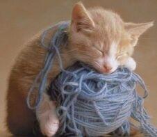 Knitting-Kitty-domestic-animals-2461772-226-197-1