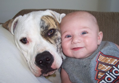 BabiesDogsAmericanBulldogTrinityIsaiahan