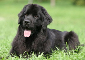 black-dog-names-5