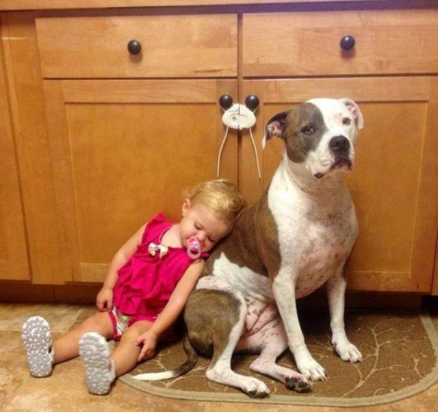 A-Four-Legged-Babysitter.jpg.pro-cmg.jpg
