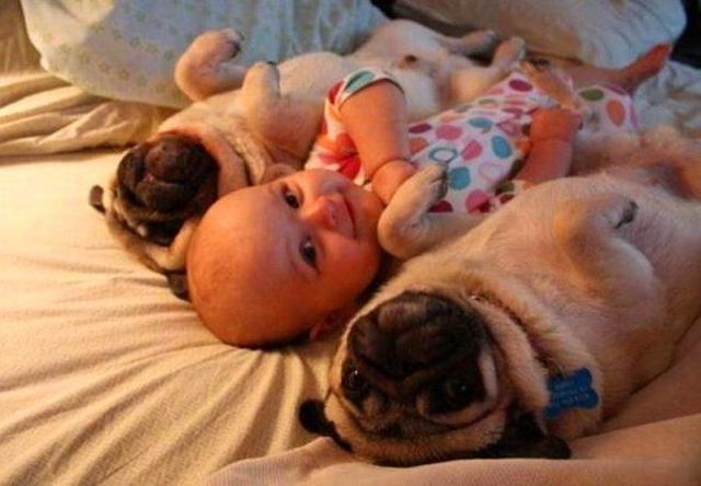 baby-dog.jpg.pro-cmg.jpg