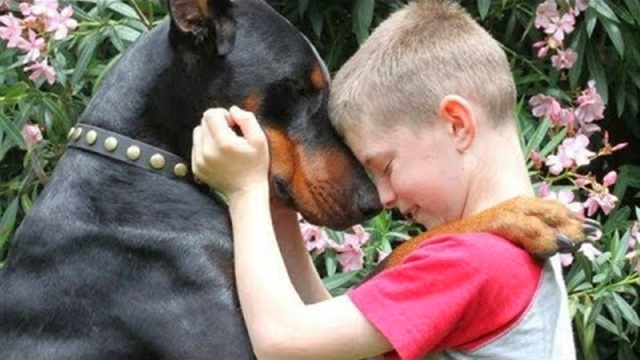 dogs-protecting-kids-1024x576.png.pro-cmg.jpg